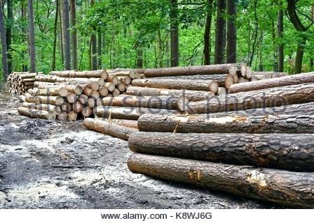 sheridan lumber oregon similar stock images