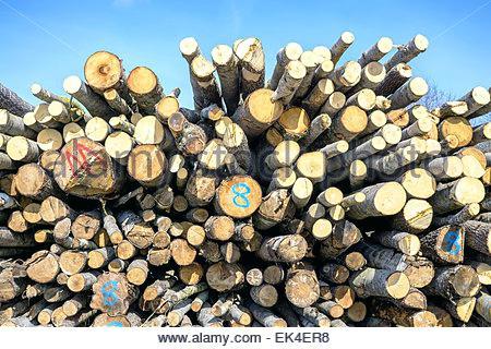 sheridan lumber oregon stacked lumber logs ready for transport stock photo