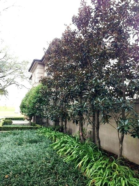 landscaping new orleans area landscaping old and uptown new garden landscaping design and maintenance